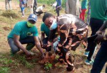 Bénin/Journée de l'arbre 2020 : Le maire Amadé Moussa s'investit pour une commune de Zè verte